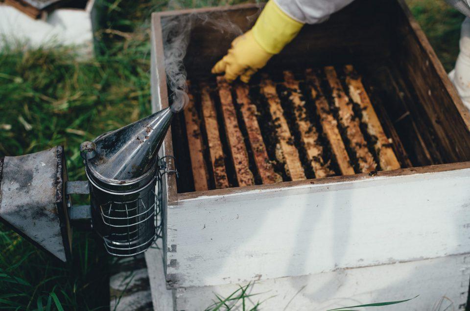 Hinweise des Deutschen Imkerbundes zur Bienenpflege während der Coronakrise
