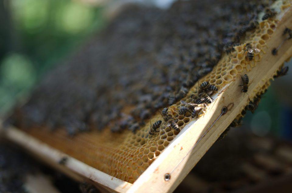 Tag der offenen Tür im Institut für Bienenkunde