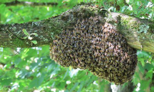 hive-2351603-2.jpg-Kompr.-1024x768